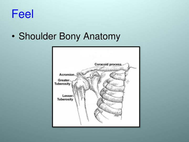 Shoulder Bony Anatomy