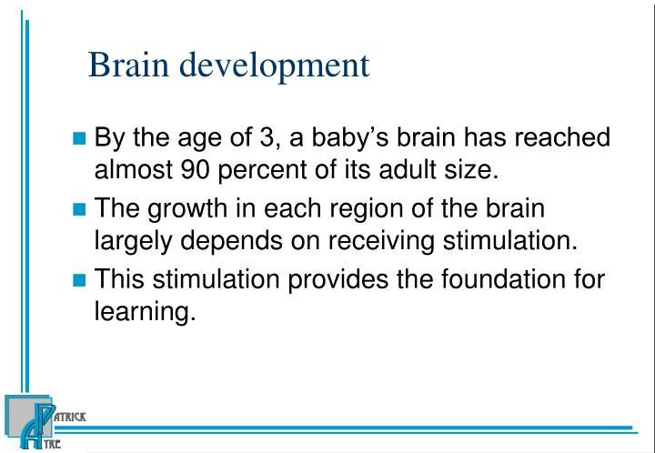Brain development