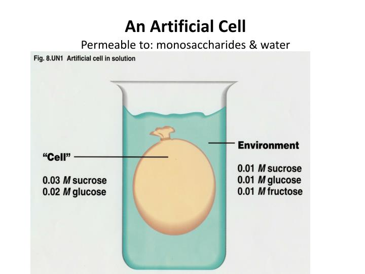 An Artificial Cell