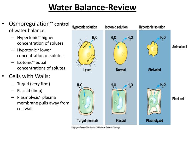 Water Balance-Review