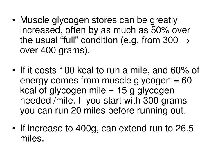 """Muscle glycogen stores can be greatly increased, often by as much as 50% over the usual """"full"""" condition (e.g. from 300"""