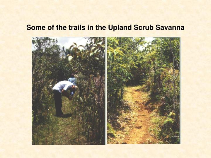 Some of the trails in the Upland Scrub Savanna