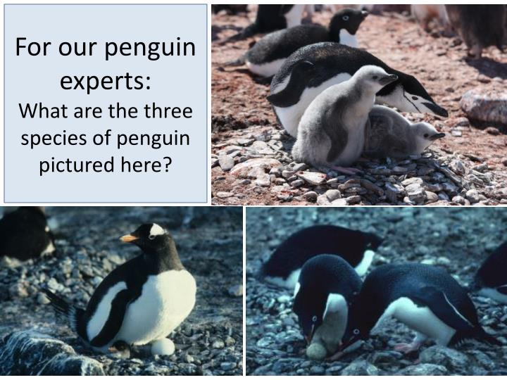 For our penguin experts: