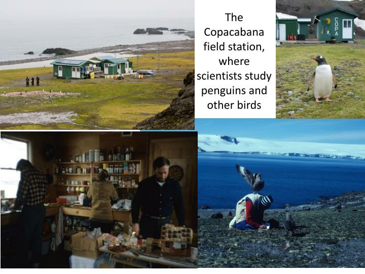 The Copacabana field station, where scientists study penguins and other birds