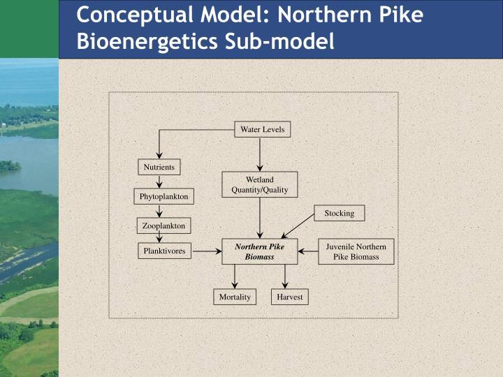 Conceptual Model: Northern Pike Bioenergetics Sub-model