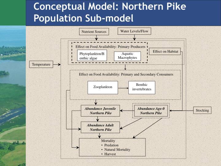 Conceptual Model: Northern Pike Population Sub-model