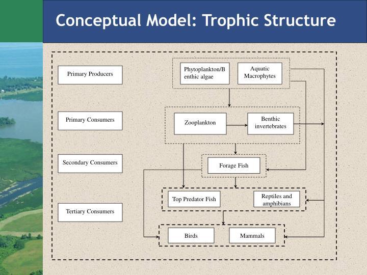 Conceptual Model: Trophic Structure