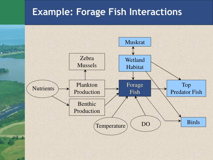 Example: Forage Fish Interactions