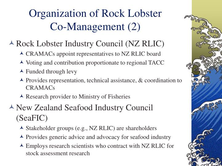 Organization of Rock Lobster