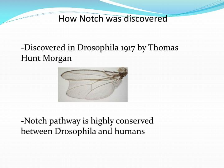 How Notch was discovered