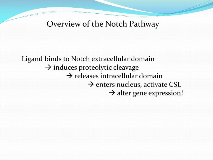Overview of the Notch Pathway