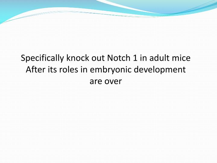 Specifically knock out Notch 1 in adult mice