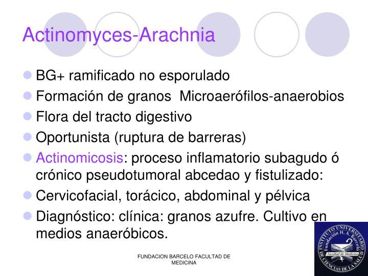 Actinomyces-Arachnia