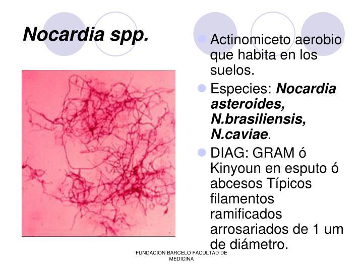 Nocardia spp.