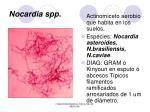 nocardia spp