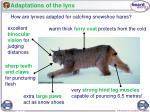 adaptations of the lynx