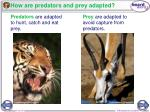 how are predators and prey adapted