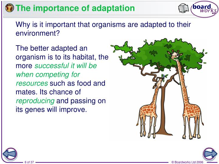 The importance of adaptation