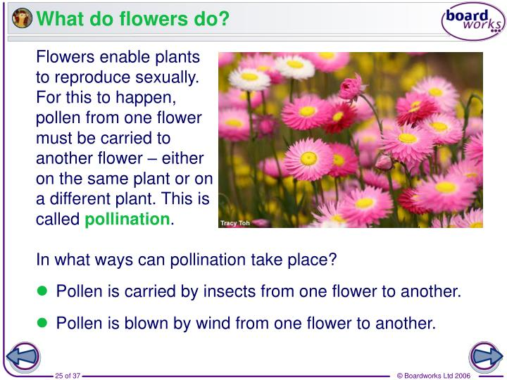 What do flowers do?