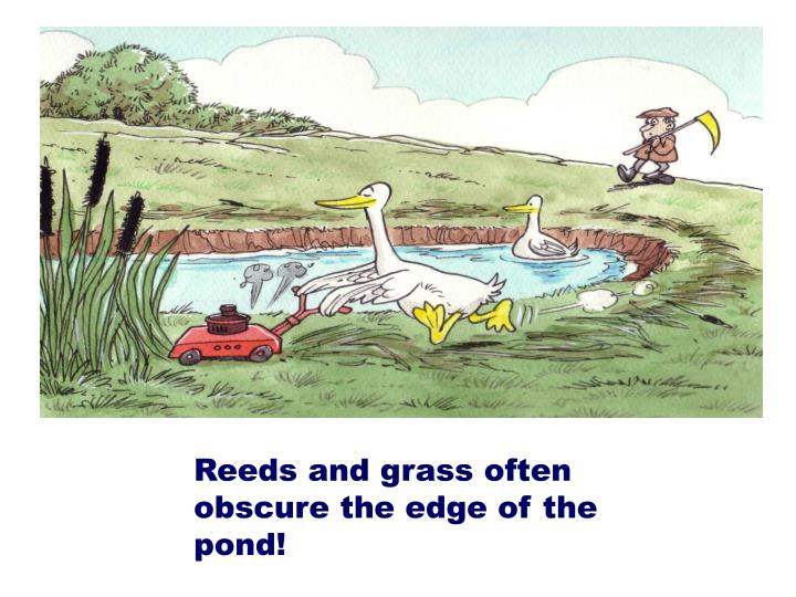 Reeds and grass often obscure the edge of the pond!