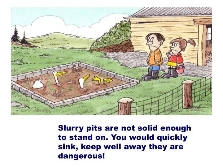 Slurry pits are not solid enough to stand on. You would quickly sink, keep well away they are dangerous!