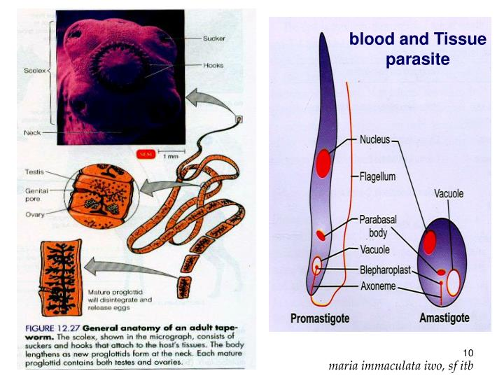 blood and Tissue