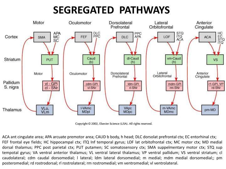SEGREGATED  PATHWAYS