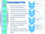 processing of tea