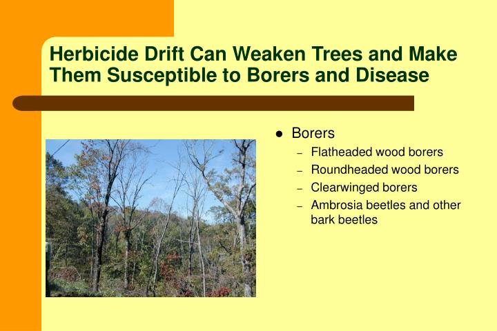 Herbicide Drift Can Weaken Trees and Make Them Susceptible to Borers and Disease