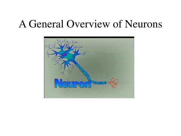 A General Overview of Neurons