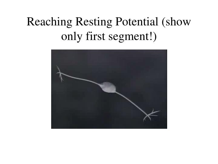Reaching Resting Potential (show only first segment!)
