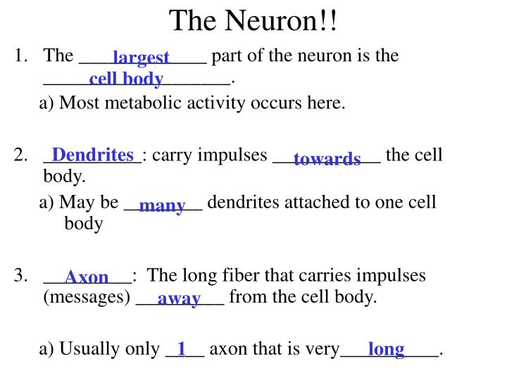 The _____________ part of the neuron is the ___________________.