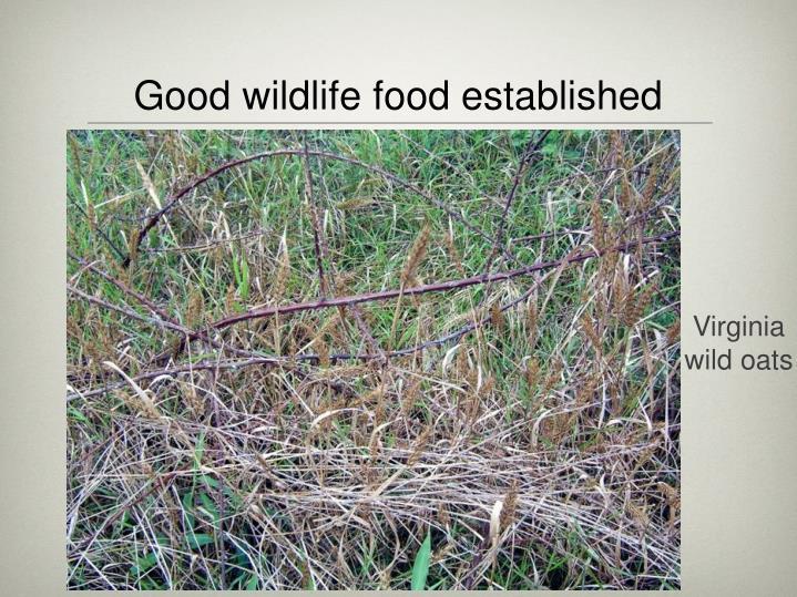 Good wildlife food established