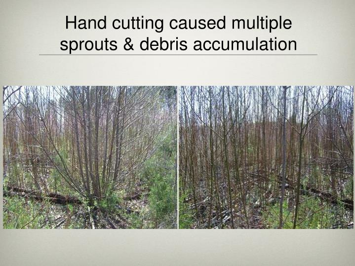 Hand cutting caused multiple sprouts & debris accumulation