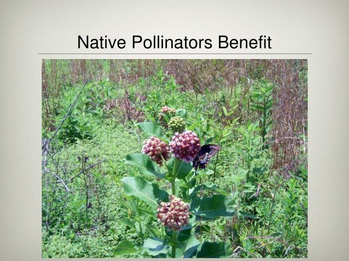 Native Pollinators Benefit