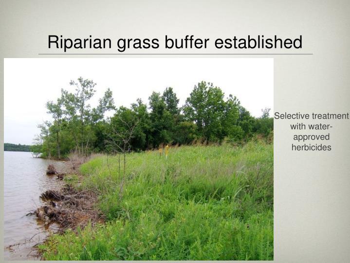 Riparian grass buffer established