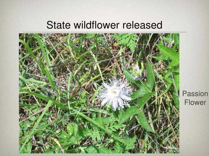 State wildflower released