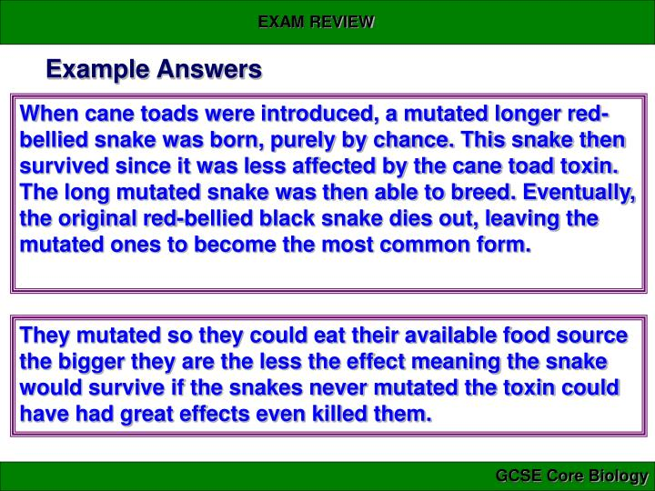 Example Answers