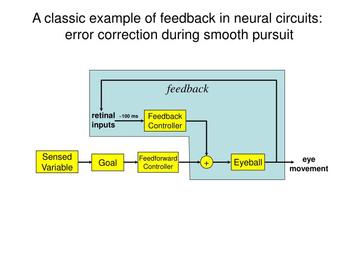 A classic example of feedback in neural circuits:
