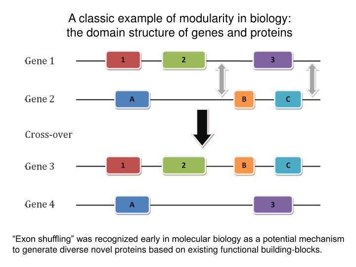 A classic example of modularity in biology: