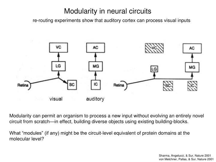 Modularity in neural circuits