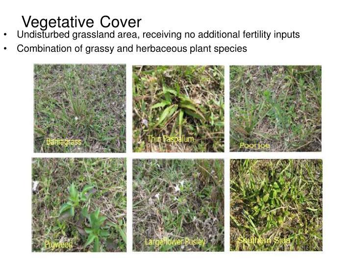 Vegetative