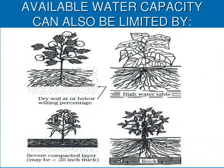 AVAILABLE WATER CAPACITY CAN ALSO BE LIMITED BY: