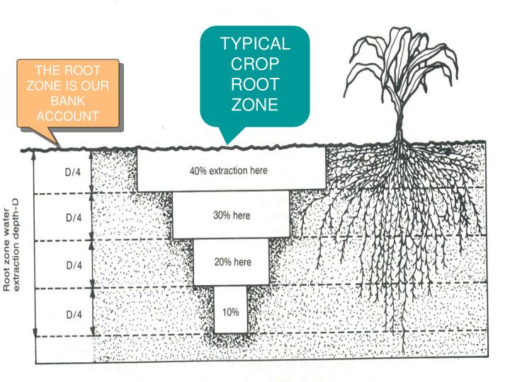 TYPICAL CROP ROOT ZONE