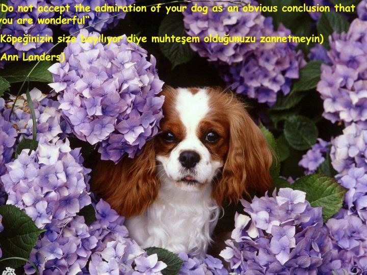 """Do not accept the admiration of your dog as an obvious conclusion that you are wonderful"""