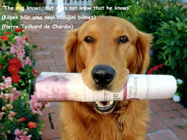 """The dog knows, but does not know that he knows"""