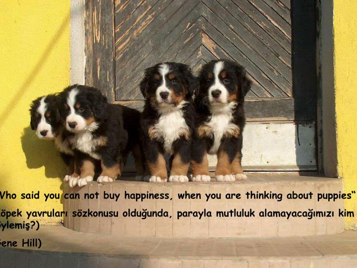 """Who said you can not buy happiness, when you are thinking about puppies"""