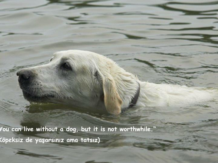 """You can live without a dog, but it is not worthwhile."""