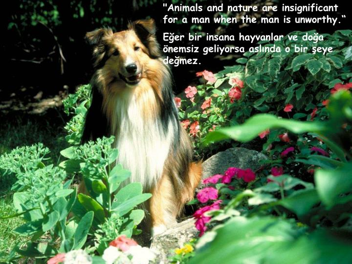 """Animals and nature are insignificant for a man when the man is unworthy."""