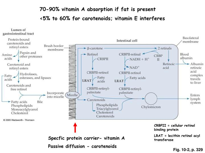 70-90% vitamin A absorption if fat is present